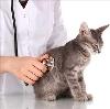 Ветеринарные клиники в Краснотурьинске